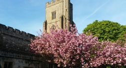 church with blossom